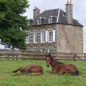 Préparateur de yearlings